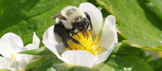 Deliver Pollen