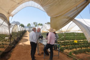 BVT staff with growers in a demonstration field