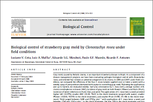 Biological control of strawberry gray mold by Clonostachys rosea under field conditions