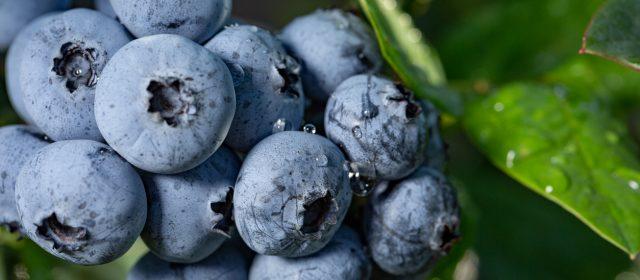 Blueberries & Caneberries